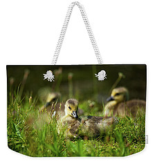Weekender Tote Bag featuring the photograph Young And Adorable by Karol Livote