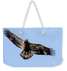 Young Bald Eagle Flight Weekender Tote Bag by Eleanor Abramson