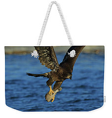 Weekender Tote Bag featuring the photograph Young Bald Eagle With Fish by Coby Cooper