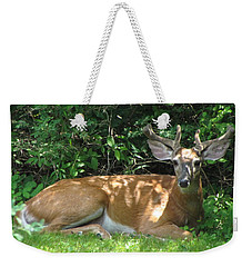 Young Buck Lying In The Shade Weekender Tote Bag by Betty Pieper