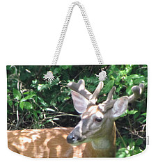 Young Buck Outside My Kitchen Window  Weekender Tote Bag by Betty Pieper