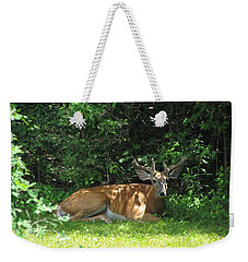 Young Buck Resting In The Shade Weekender Tote Bag by Betty Pieper