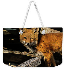 Young Fox In The Wood Weekender Tote Bag