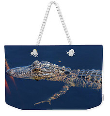 Weekender Tote Bag featuring the photograph Young Gator 1 by Arthur Dodd