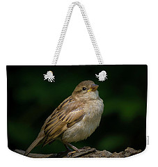 Young House Sparrow Weekender Tote Bag