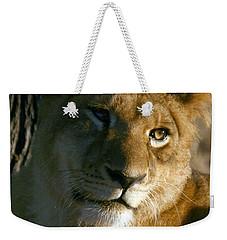 Weekender Tote Bag featuring the photograph Young Lion by Karen Zuk Rosenblatt