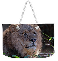 Young Lion King Weekender Tote Bag