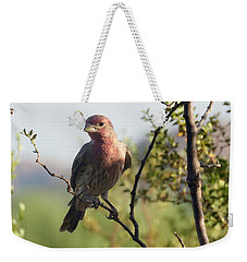 Young Male House Finch Weekender Tote Bag
