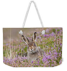 Young Mountain Hare In Purple Heather Weekender Tote Bag