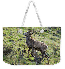 Weekender Tote Bag featuring the photograph Young Ram Climbing by Mike Dawson