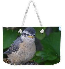 Weekender Tote Bag featuring the photograph Young Red-breasted Nuthatch No. 1 by Angie Rea
