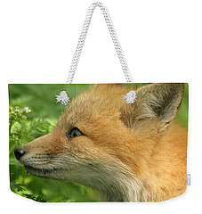Weekender Tote Bag featuring the photograph Young Red Fox In Profile by Doris Potter