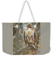 Young Red Tailed Hawk  Weekender Tote Bag