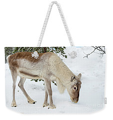 Weekender Tote Bag featuring the photograph Young Rudolf by Delphimages Photo Creations