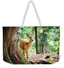 Young Sika Deer In Nara Park Weekender Tote Bag