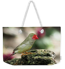 Young Star Finch Weekender Tote Bag