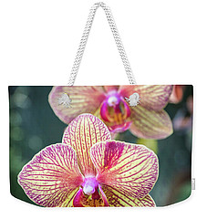 Weekender Tote Bag featuring the photograph You're So Vain by Bill Pevlor