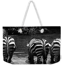 Zebras Cautiously Drinking Weekender Tote Bag by Darcy Michaelchuk