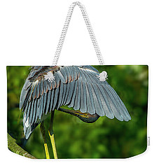 Weekender Tote Bag featuring the photograph Preening Reddish Heron by Donald Brown