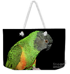 Weekender Tote Bag featuring the photograph Senegal Parrot by Debbie Stahre