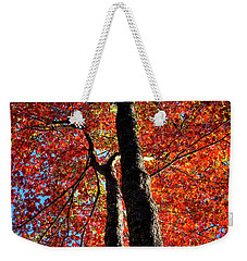Weekender Tote Bag featuring the photograph Autumn Reds by David Patterson