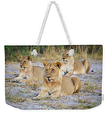 Weekender Tote Bag featuring the photograph 3 Lions by John Rodrigues