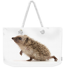 Weekender Tote Bag featuring the photograph A Prickly Problem by Warren Photographic