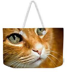 Adorable Ginger Tabby Cat Posing Weekender Tote Bag