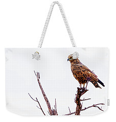 Weekender Tote Bag featuring the photograph African Crowned Eagle by Kay Brewer