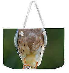 Weekender Tote Bag featuring the photograph American Kestrel 9251502 by Rick Veldman