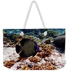 Weekender Tote Bag featuring the photograph Aruban French Angelfish by Lars Lentz