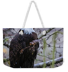 Bald Eagle In Rain Forest Weekender Tote Bag