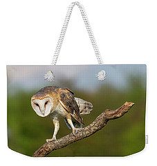 Weekender Tote Bag featuring the photograph Barn Owl 5151801 by Rick Veldman
