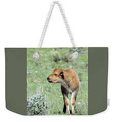 Bison Calf In Lamar Valley Weekender Tote Bag