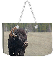 Bison In Hayden Valley Weekender Tote Bag