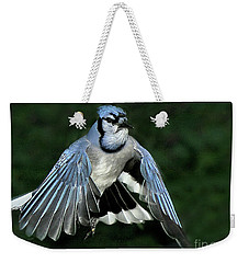 Weekender Tote Bag featuring the photograph Blue Jay by Debbie Stahre
