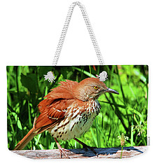 Weekender Tote Bag featuring the photograph Brown Thrasher by Debbie Stahre