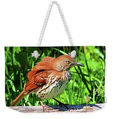 Brown Thrasher Weekender Tote Bag