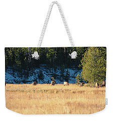 Weekender Tote Bag featuring the photograph Bull And His Babes by Pete Federico