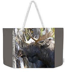 Bull Moose Study Weekender Tote Bag