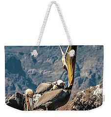 California Brown Pelicans In Ilsa Danzante Harbor Weekender Tote Bag