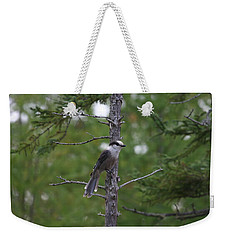 Weekender Tote Bag featuring the photograph Canada Jay 101305 by Rick Veldman