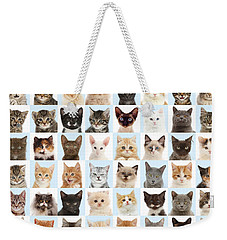 Weekender Tote Bag featuring the photograph Cats Or Chess by Warren Photographic