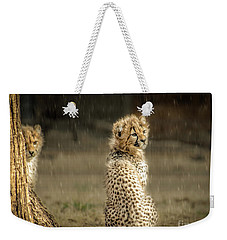 Weekender Tote Bag featuring the photograph Cheetah Cubs And Rain 0168 by Donald Brown