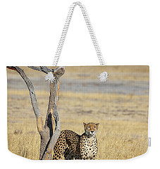 Weekender Tote Bag featuring the photograph Cheetah by John Rodrigues