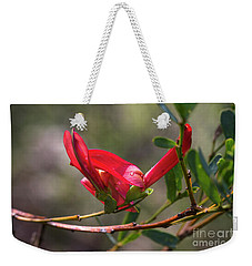 Weekender Tote Bag featuring the photograph Cockies Tongue Templetonia Retusa by Elaine Teague