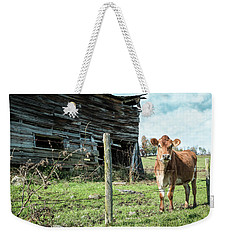 Weekender Tote Bag featuring the photograph Cow By The Old Barn, Earlville Ny by Gary Heller