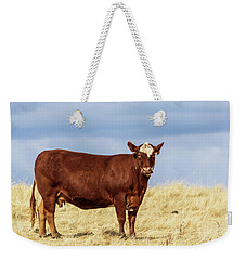 Cow Standing In A Pasture Weekender Tote Bag