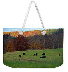 Weekender Tote Bag featuring the photograph Cows Grazing On A Fall Day by Angela Murdock