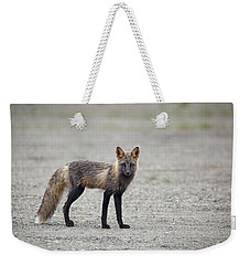 Cross Fox In Alaska Weekender Tote Bag